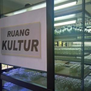 kultur_1