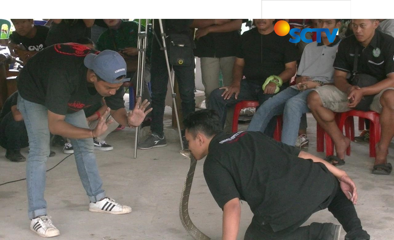 komunitas satwa di SCTV