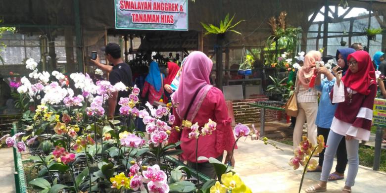 Swalayan anggrek di Kampoeng Anggrek Kediri, Jawa Timur, Minggu (11/2/2018).(KOMPAS.com/M AGUS FAUZUL HAKIM)