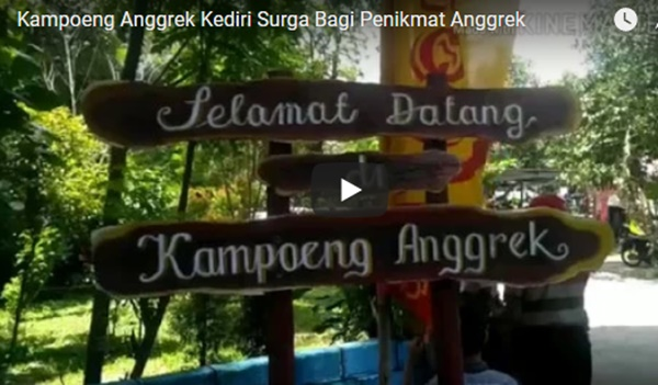 video kampoeng anggrek