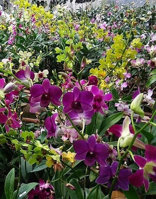 Stok bunga lebaran
