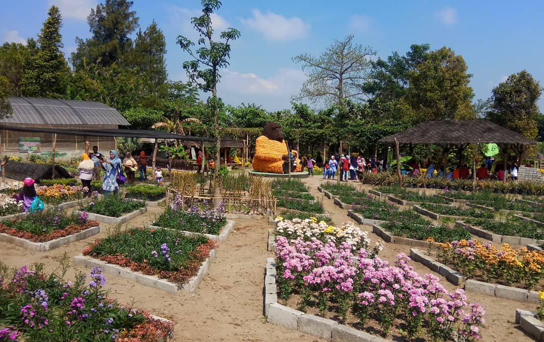 chrisant garden2